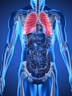 lungs-anatomy-human-body-CPR-emergency-first-aid-at-work-course-didcot-oxfordshire-berkshire-wiltshire-england-united-kingdom-UK-saveyu